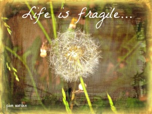 greeting-card-flower-life-is-fragile2