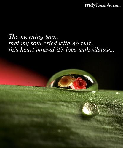 539-the-morning-tear
